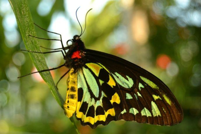 Casa delle Farfalle 1